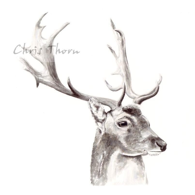 Chris Thorn Fallow Deer | Art | Pinterest | Fallow deer