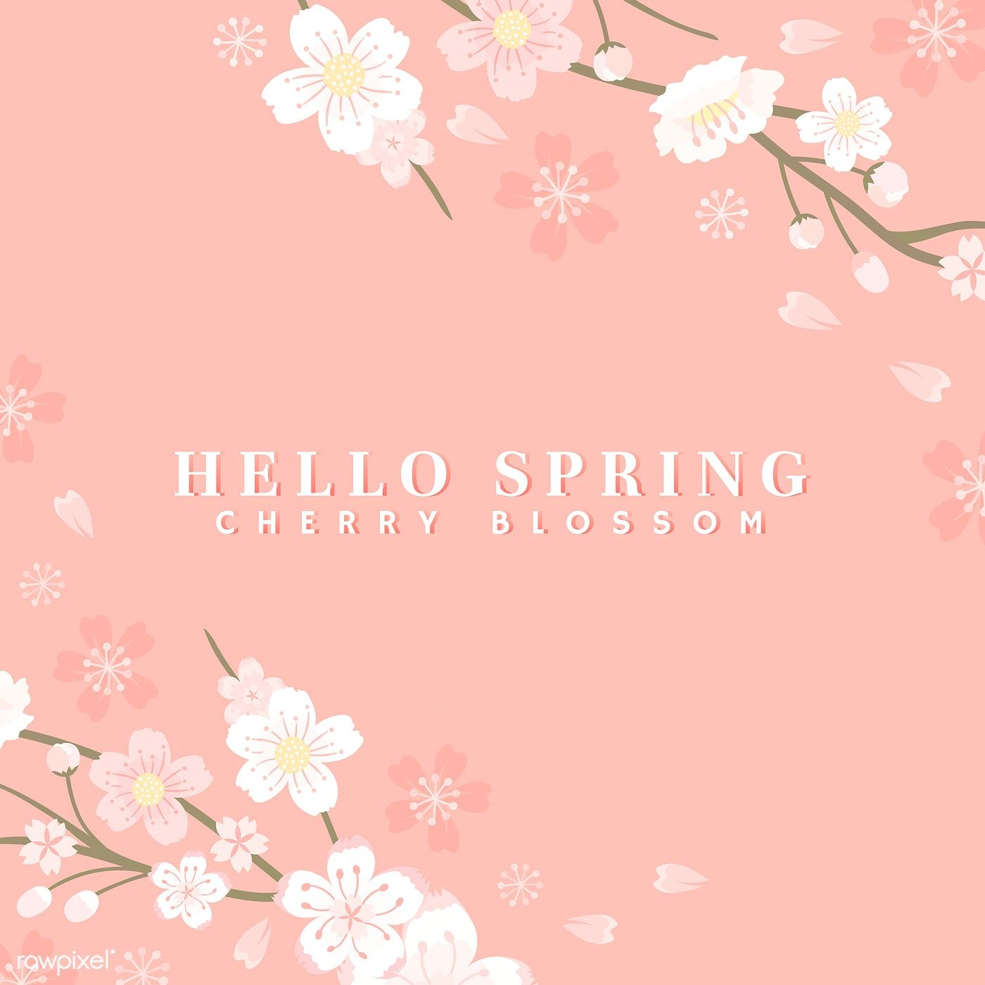 Pink Cherry Blossom Background Vector Free Image By Rawpixel Com Manotang In 2020 Cherry Blossom Background Vector Free Stock Images Free