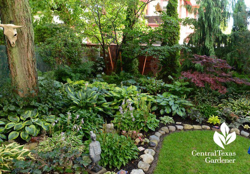 Hosta Serene Shade Garden Buffalo Central Texas Gardener With