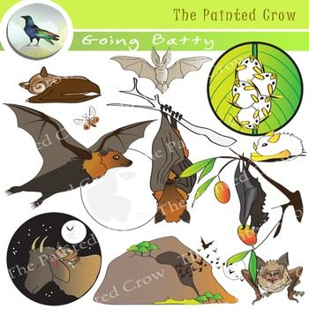 "This 24 piece ""Going Batty"" clip art set features a variety of bats both small and large, from Flying Foxes, to vampire bats, to a colony of Honduran White Bats sheltering under a heliconia leaf. These graphics can be used to demonstrate different bat food sources (fruit, insects, blood). Also included is an illustration of a bat with White Nose Syndrome, a fungal disease currently affecting millions of bats in the U.S. and Canada."