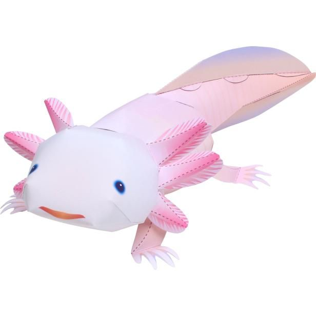 Axolotl AnimalsPaper CraftAnimalsPaper CraftPet series