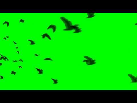 Hd Bird Flock Flying Away Youtube Free Green Screen Green Screen Video Backgrounds Flock Of Birds