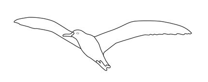 Click To See Printable Version Of Albatross Coloring Page Coloring Pages Free Printable Coloring Pages Printable Coloring Pages
