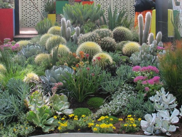 Succulents by landscape gardener phillip withers cactus succulents by landscape gardener phillip withers workwithnaturefo