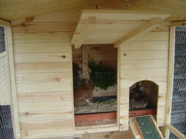 Unser neues Außengehege - Kaninchen