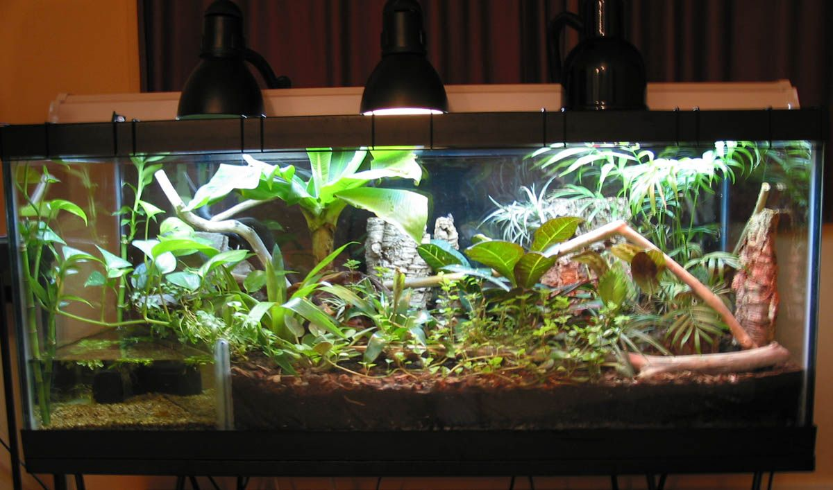 This Is My 75 Gallons Vivarium Chris Lizard Bearded