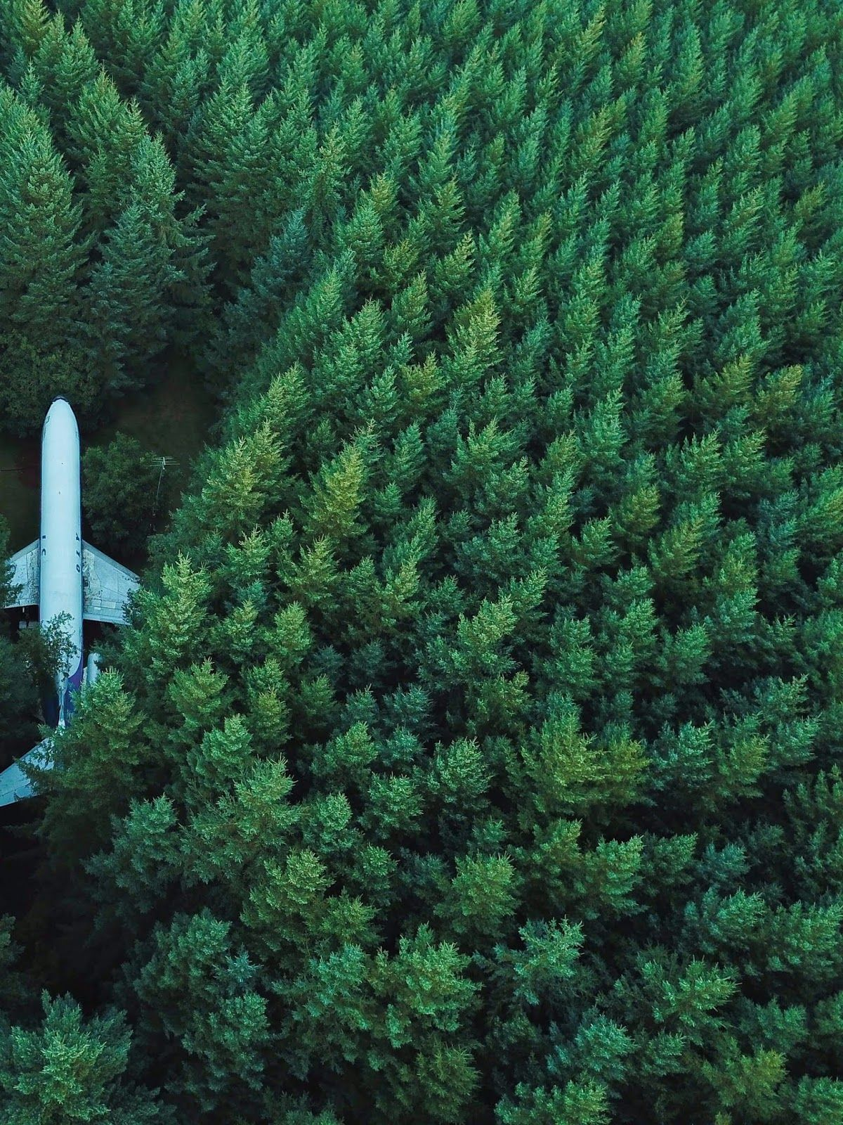 plane, forest, tree, lost, nature 4k background