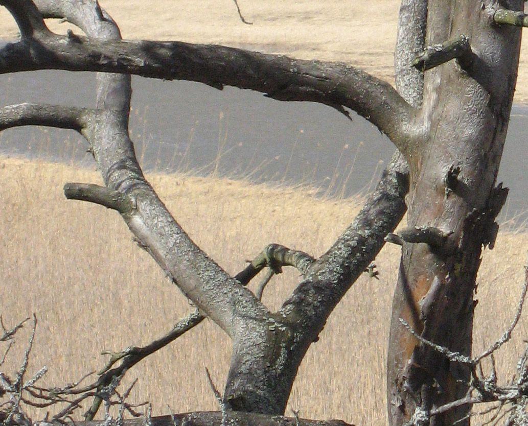 Kivinokassa keväilyä