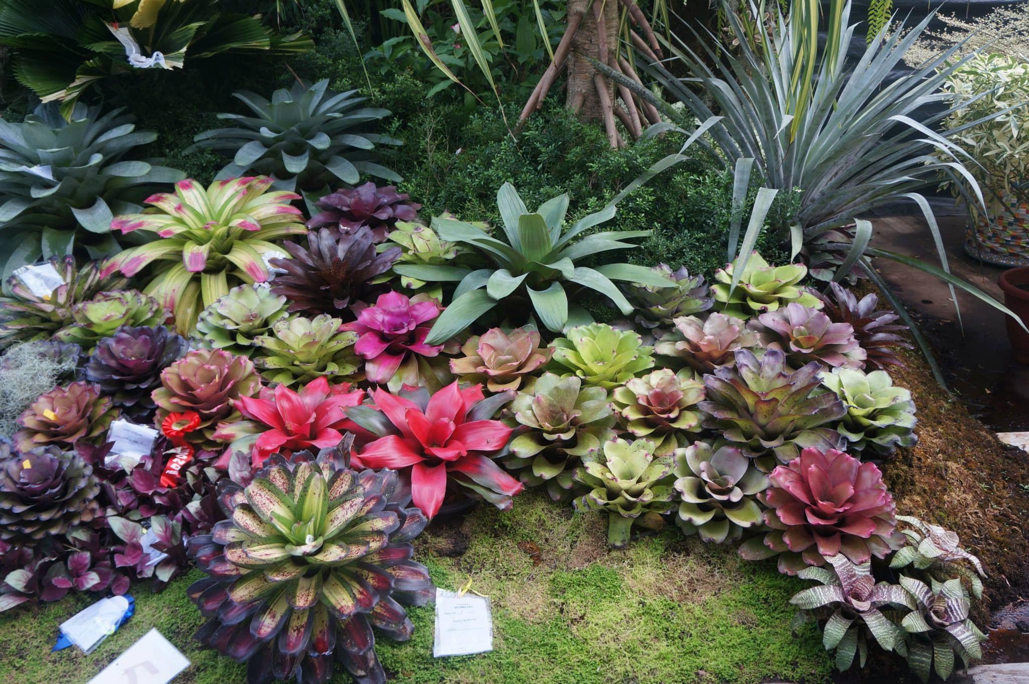 display garden at kadayawan festival philippines tropical