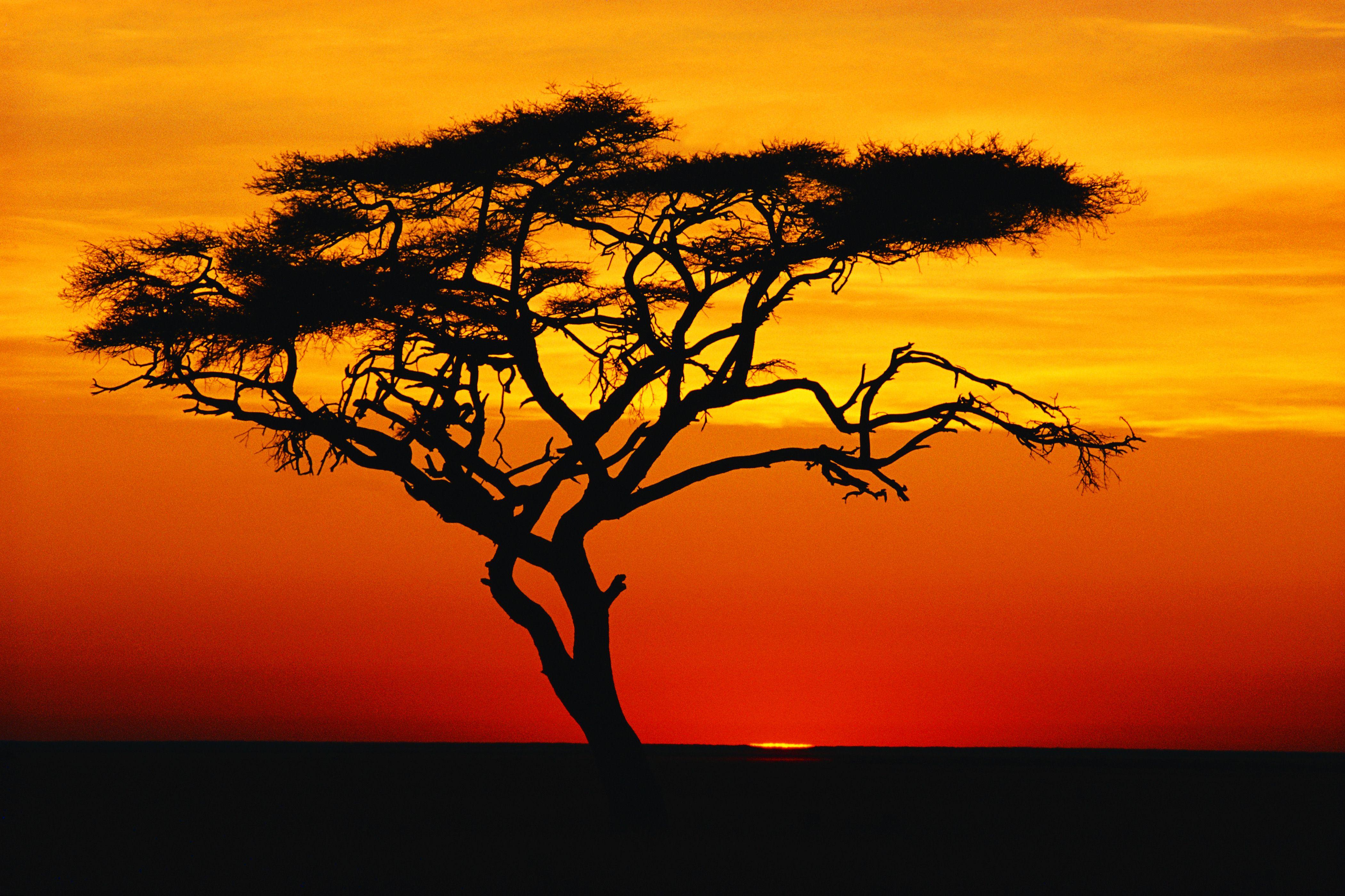 Fondos De Pantalla Hd Naturaleza Africa Sunset Sunset Pictures African Sunset