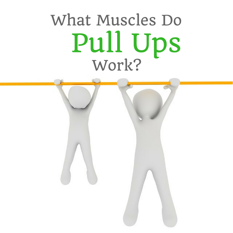 What Muscles Do Pull Ups Work Benefit Muscles And Exercises