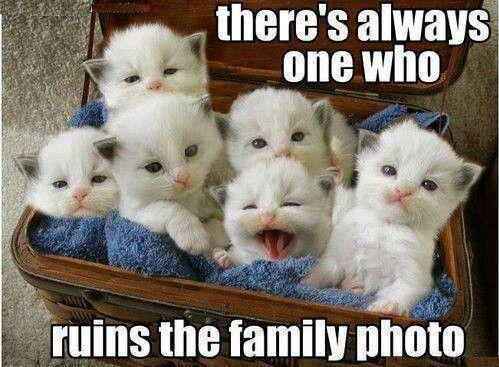 Family photo bomber xD
