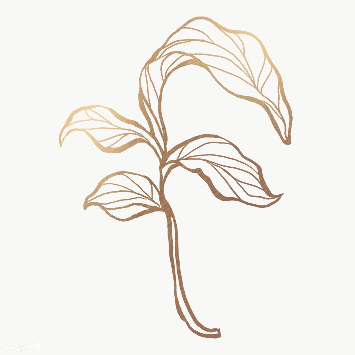 Detailed Golden Leaves Transparent Pg Premium Image By Rawpixel Com Nunny Golden Leaves Leaf Outline Photoshop Images