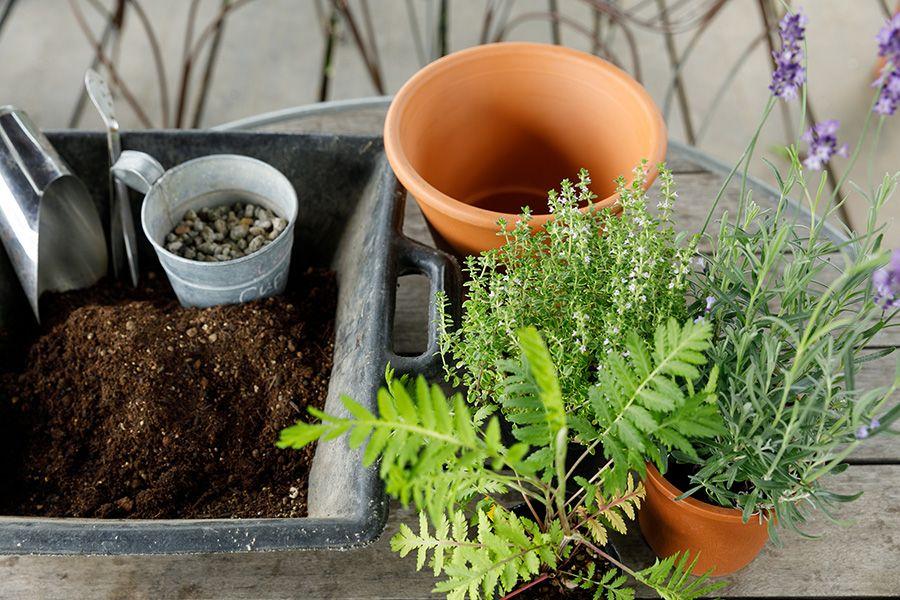 植物の力を生かすガーデニング虫除け効果の高い植物をベランダで育てる