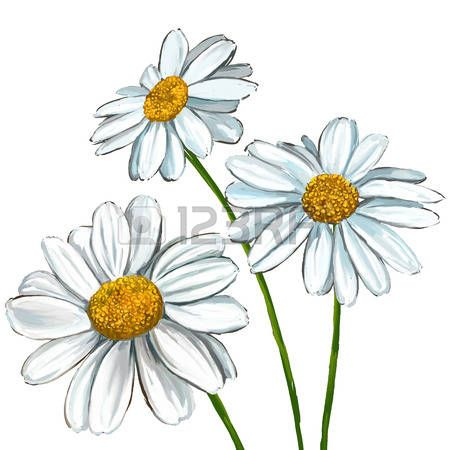 Dessin Fleur Daisy Illustration Tiree Par La Main Aquarelle