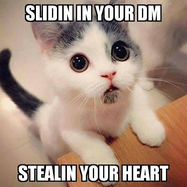 Awww Kitten So Cute Cat Memes Mr Steal Your Girl Take It All I