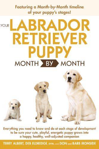 Frases 365 Frases365 Com Labrador Retriever Labrador Retriever
