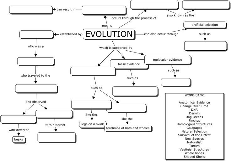 Evolution Concept Map. Great Evoltuion Worksheet