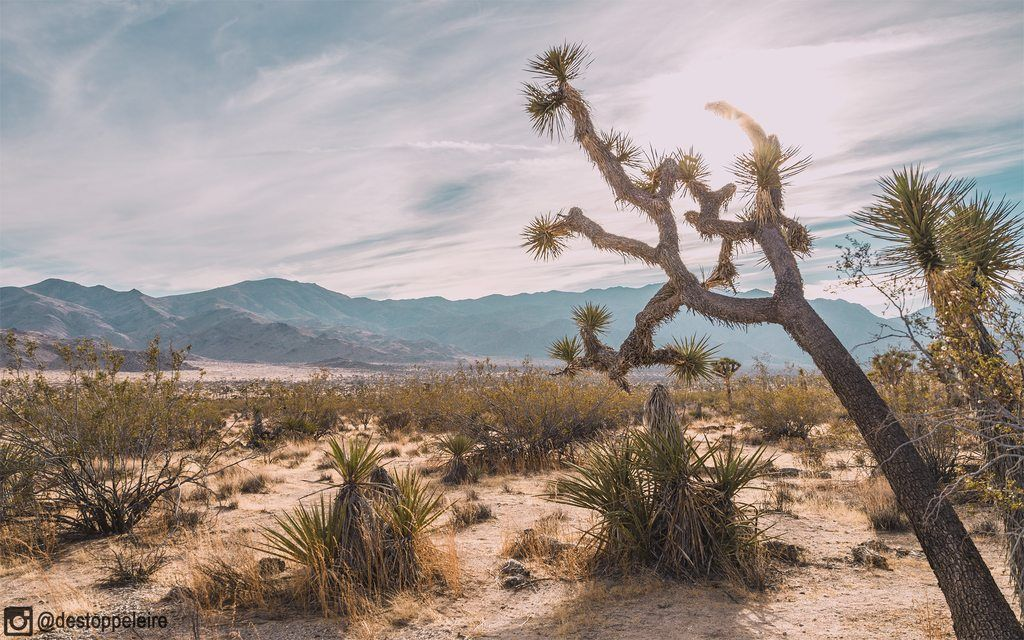Mojave High Desert CA. [OC] [2560x1600]