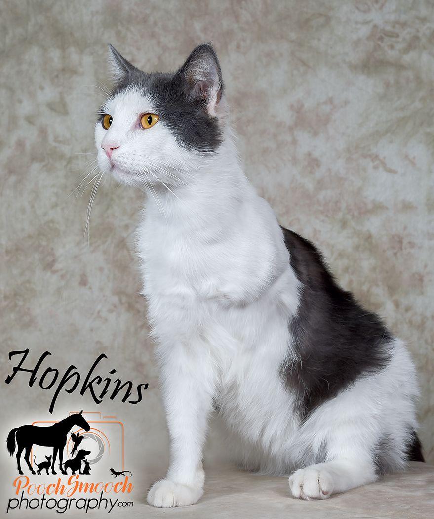 Adopt Hopkins 3 legs on Pet adoption