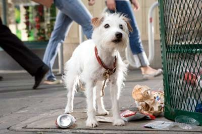 Friday The Ingenious Terrier From Hotel For Dogs Canine Movie