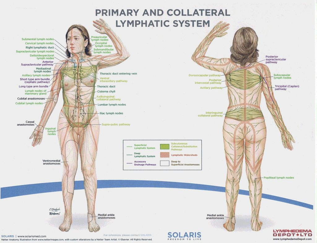 Diagram Of The Lymph Nodes Lymph Nodes In Body Diagram ...