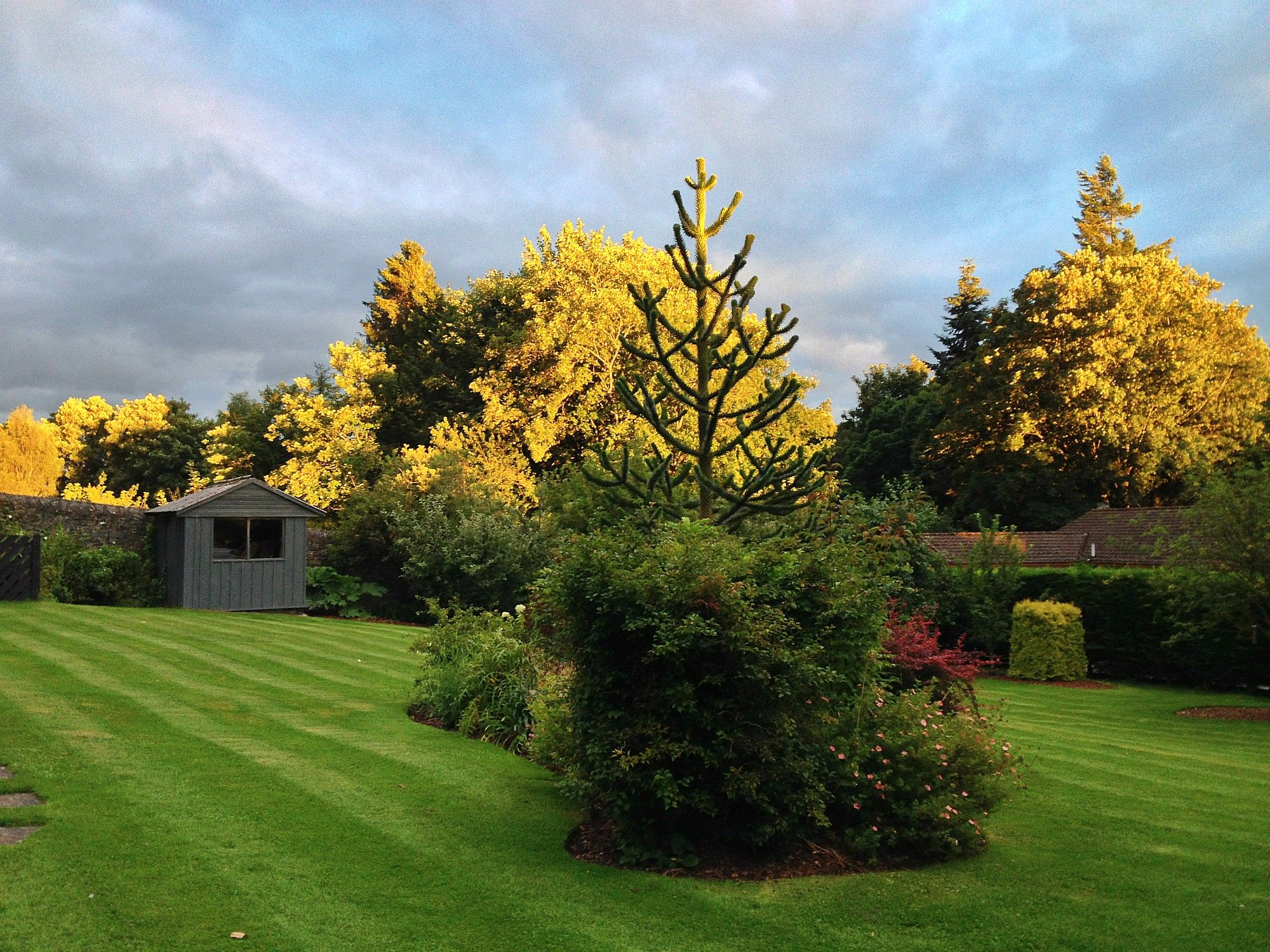 Some more unique evening sunshine shining down on the Craigatin garden Pitlochry last night!