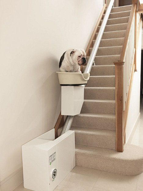 Absurd Canine Stair Lift Lets Plump Pups Rest Their Dogs Idee