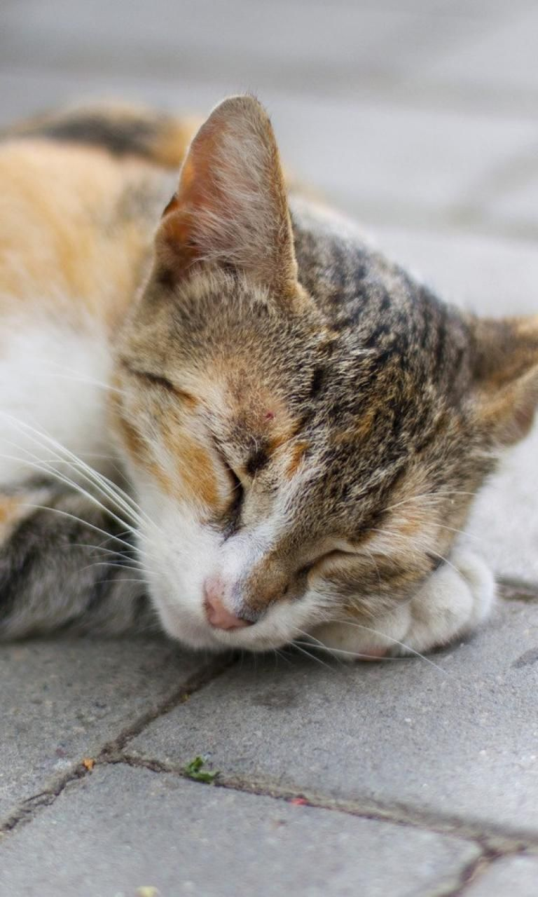 Seizures in cats symptoms and treatments cats in care