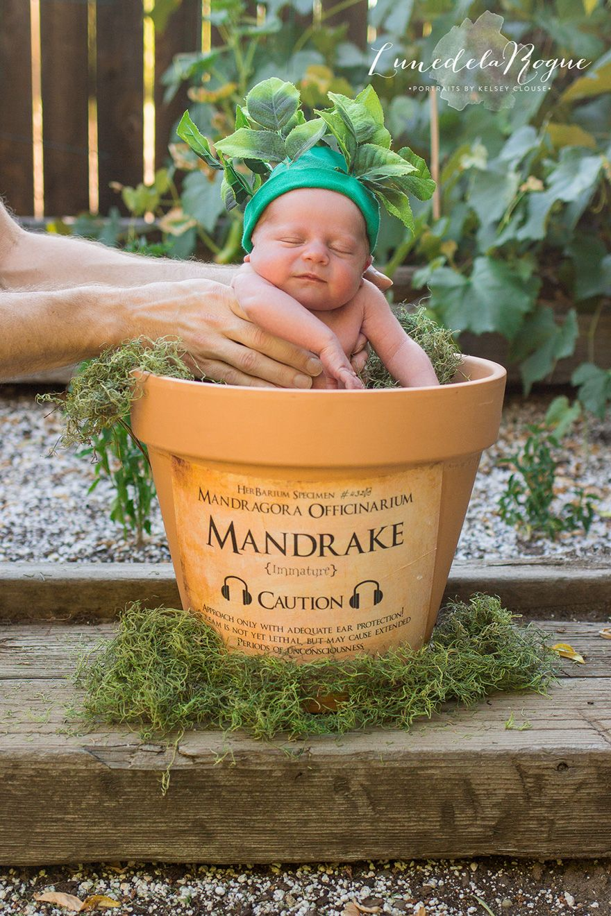 Harry potter themed sibling photoshoot made magical with a mini mandrake