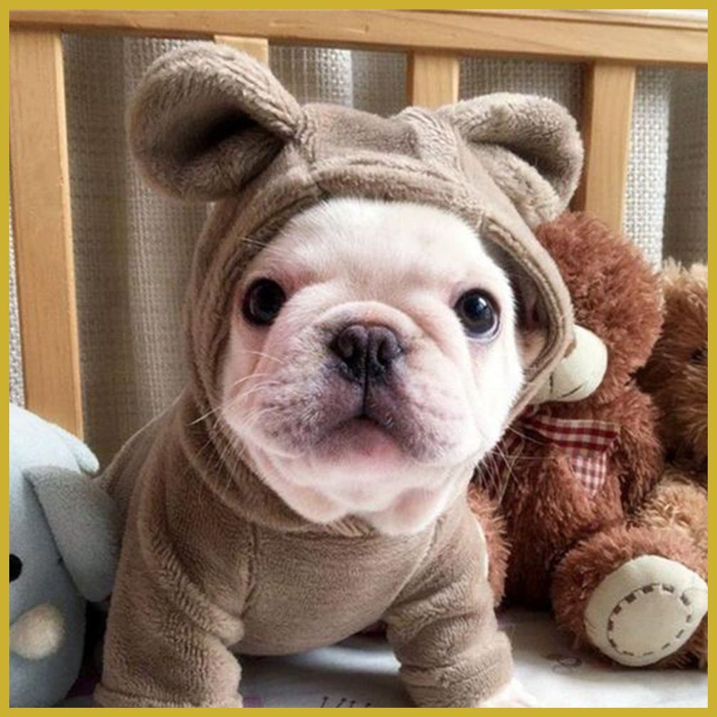 HOW TO CHOOSE CLOTHES FOR YOUR FRENCH BULLDOG