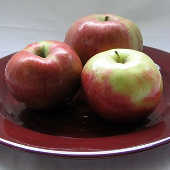 Northern Spy Apples Apple, Favorite recipes, Apple recipes
