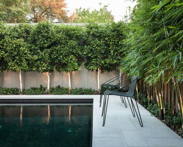 brise vue en bambou et arbres autour de la piscine