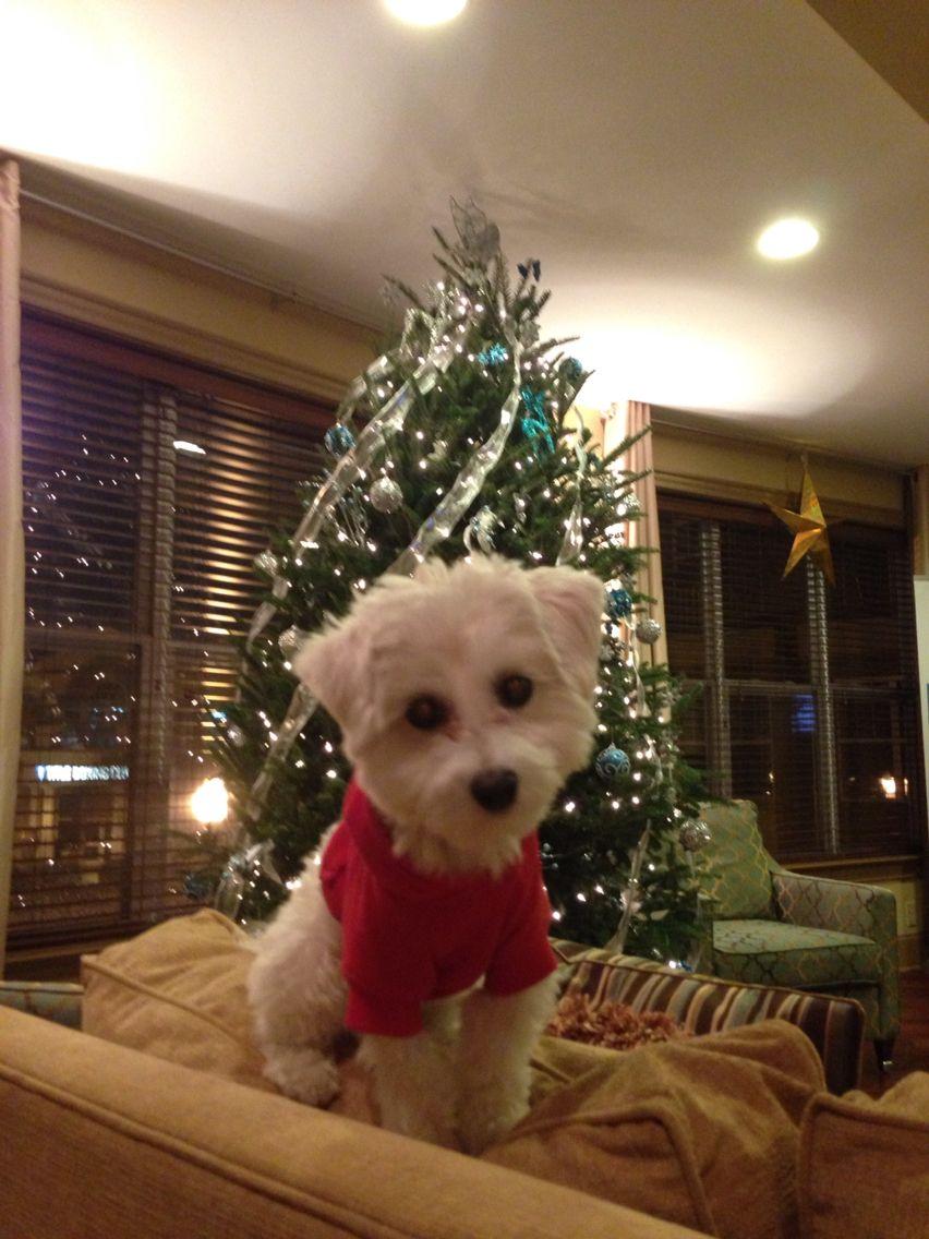 Ya'll ready for Christmas??