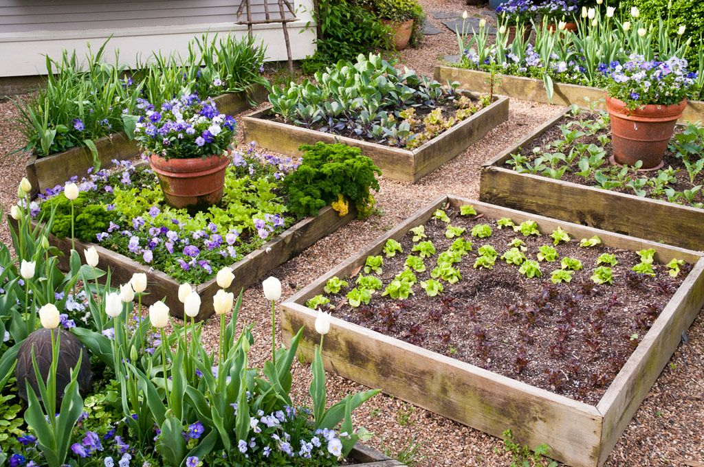 beautiful raised bed vegetable gardens with paths of shale