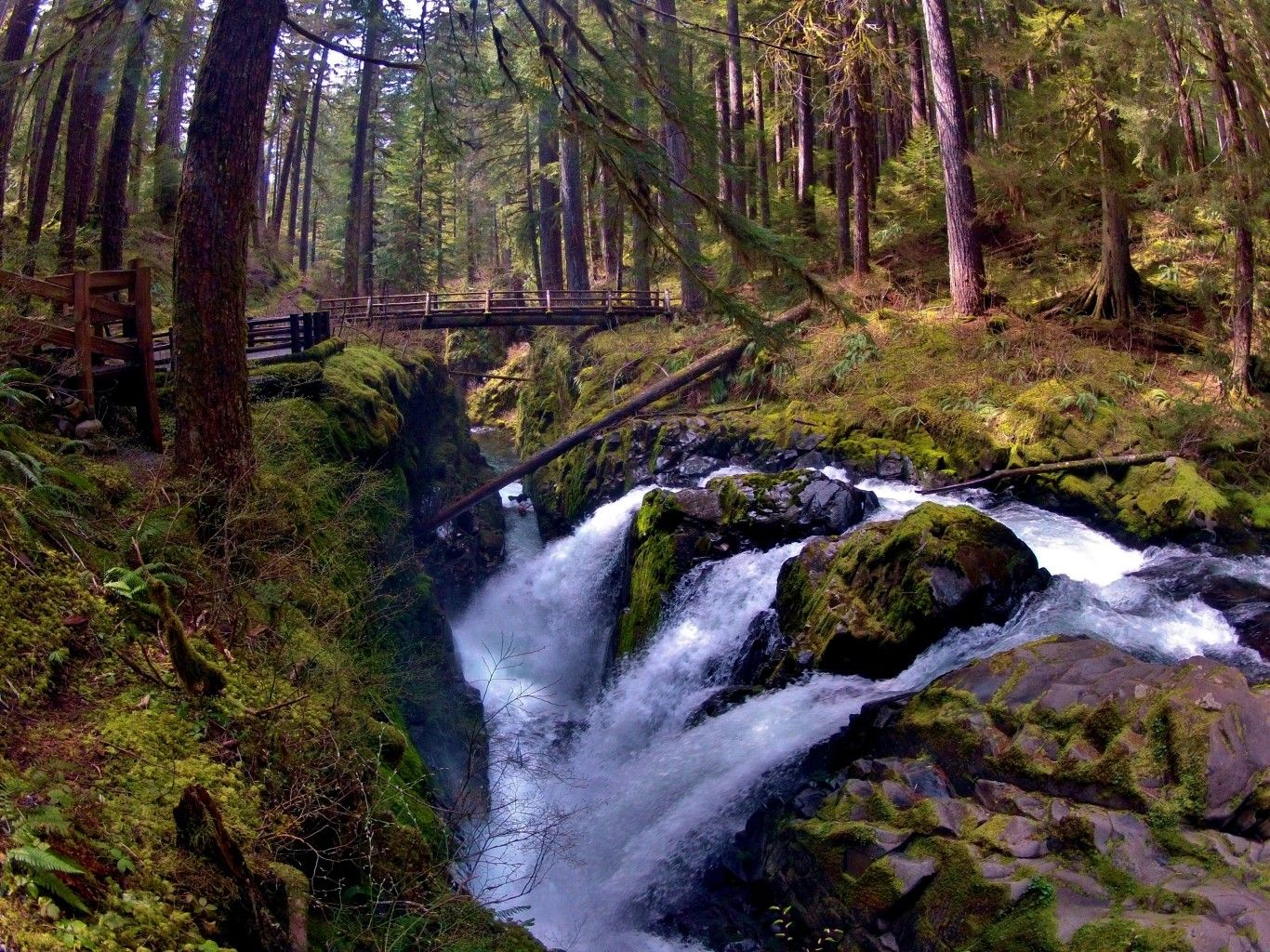 Ten Awesome Bridge Crossings in Olympic National Park | The Outdoor Society