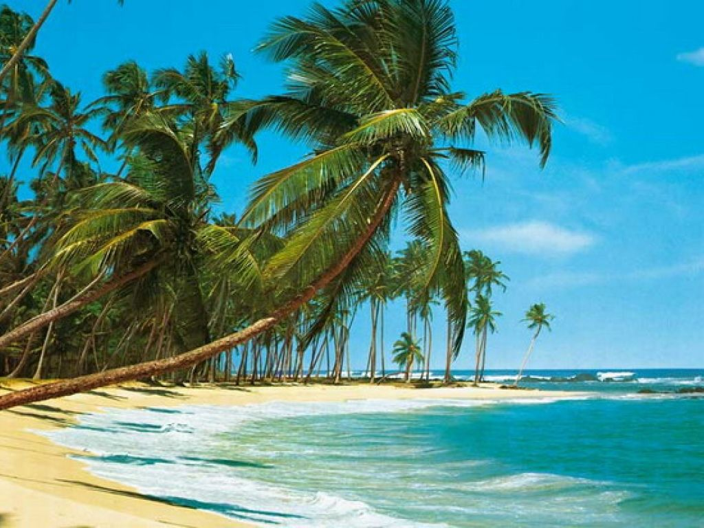 Tropical beach mural decorating ideas beach scene tropical for Beach mural wallpaper