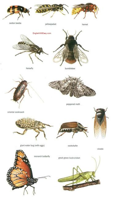 Insects Dictionary For Kids Insects Peppered Moth Pictures