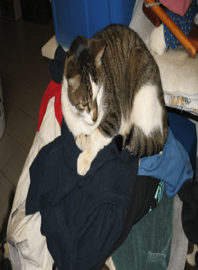 Why Does My Cat Sleep On My Clothes Cat Guides Cat