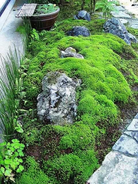 Moss Ground Cover Japanese Garden Small Garden Asian Garden
