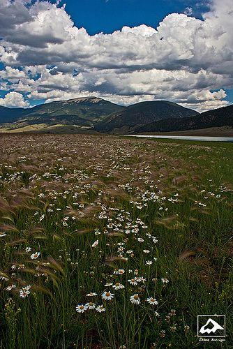 Flowers near Eagle Nest Lake - New Mexico