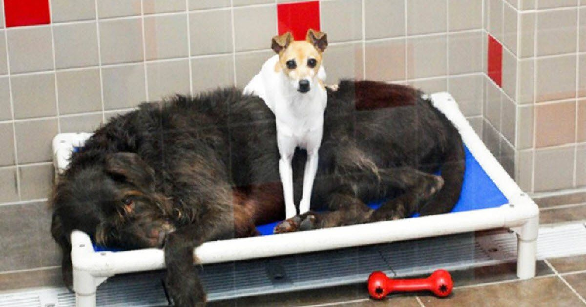 After These Two Dogs Lost Their Home, They Comfort Each