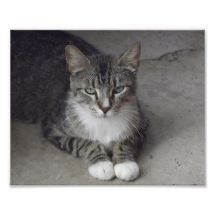 Striped Grey And White Cat With Green Eyes Photo Print Xmas