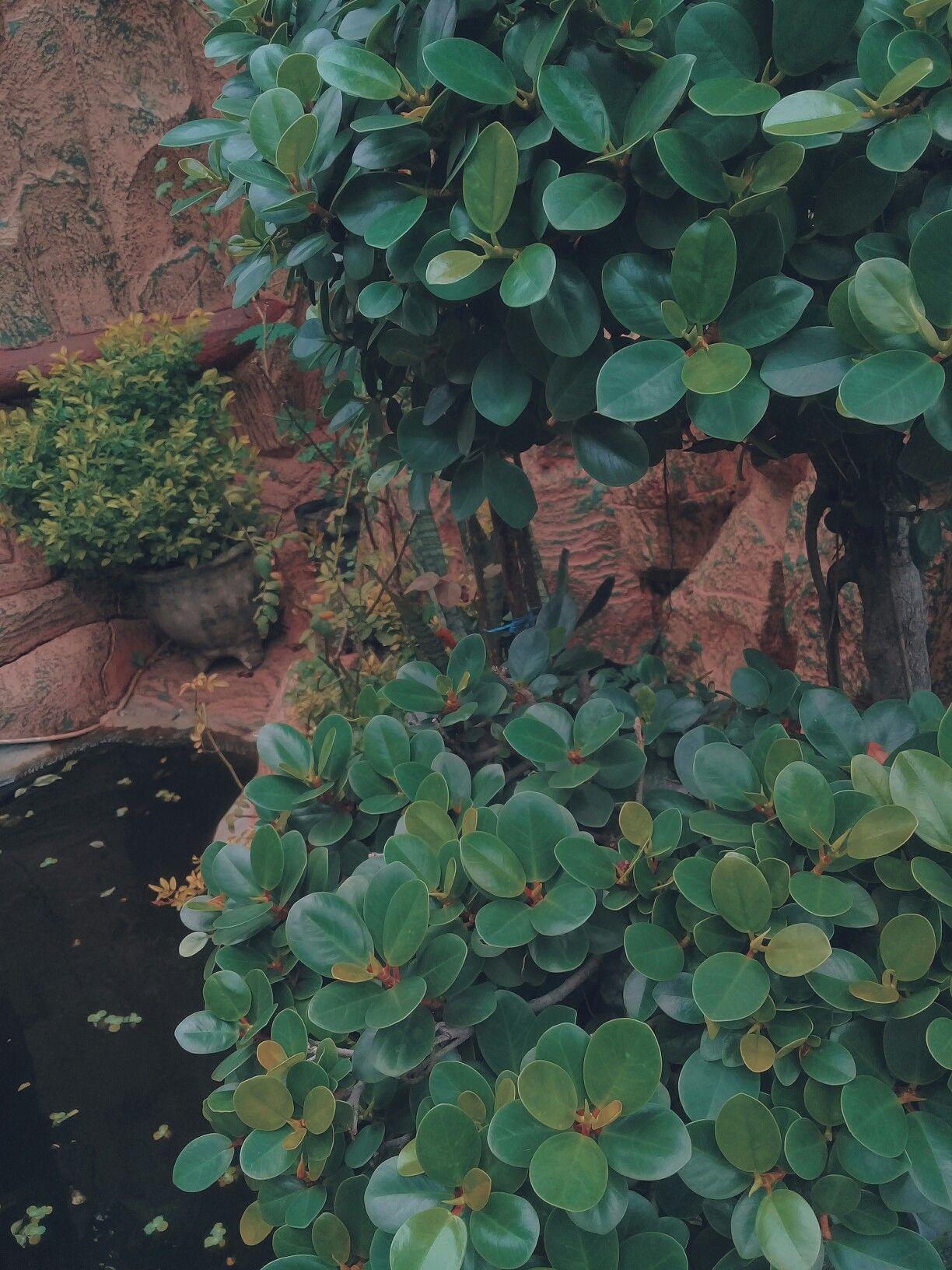 foto jepretan vsco cafe background wallpaper