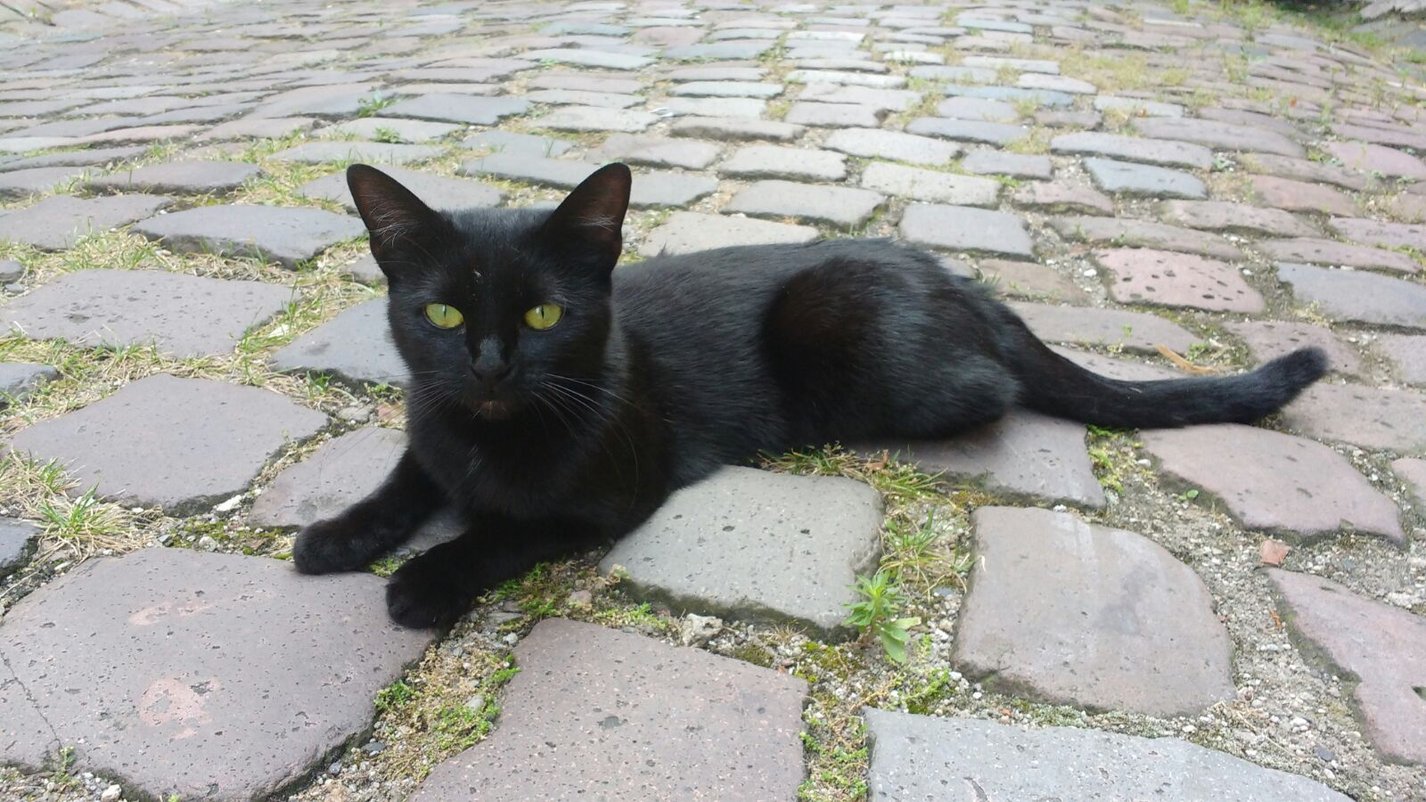 saw this beauty black cat on the streets today