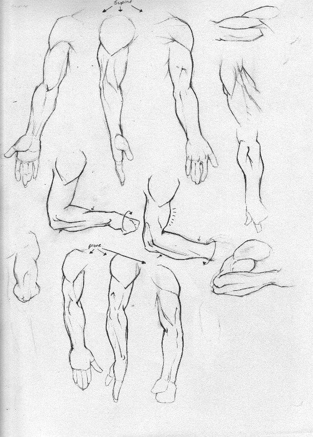 Anatomy Study Part 3-Arms by Rogzilla.deviantart.com on @DeviantArt ...