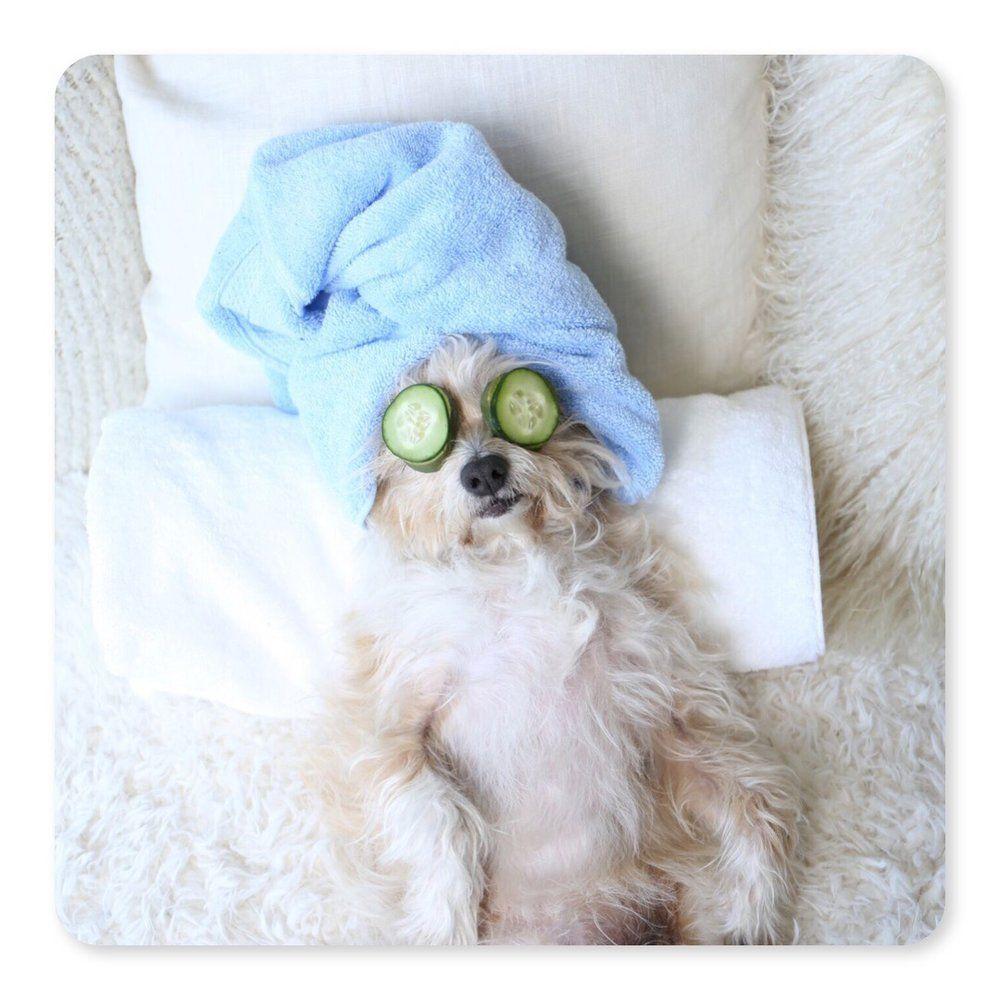 Cafepress Blind Dog T Shirt Pet Clothing Funny Want