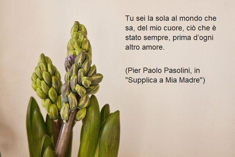 Frase Di Pier Paolo Pasolini Frasi Sulla Mamma Da Dedicare