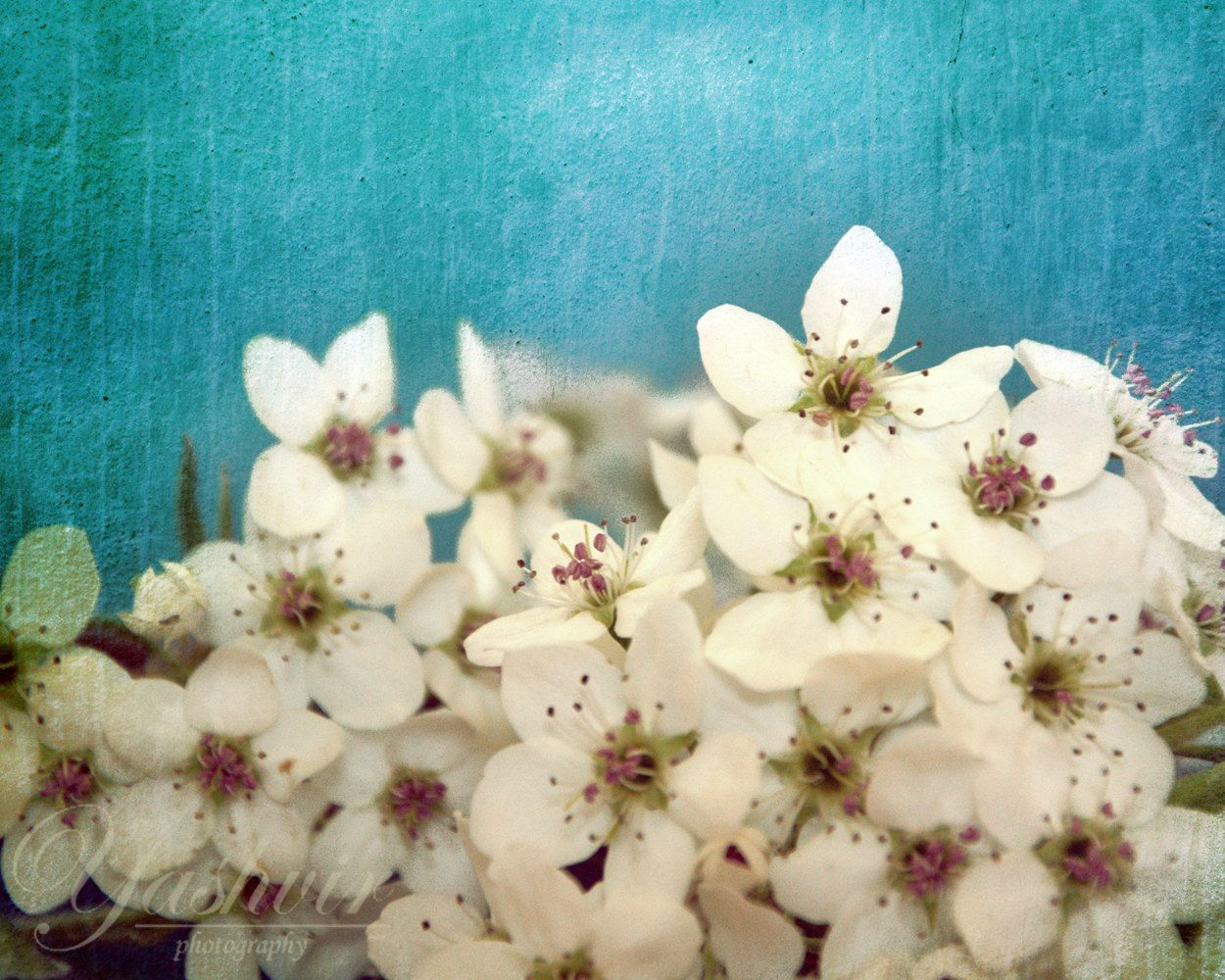 Cherry Blossoms 16 By 20 Inches Photography Print Of Flowers Rustic Blue Teal Background Enchanted And Romantic Spring Home Decor
