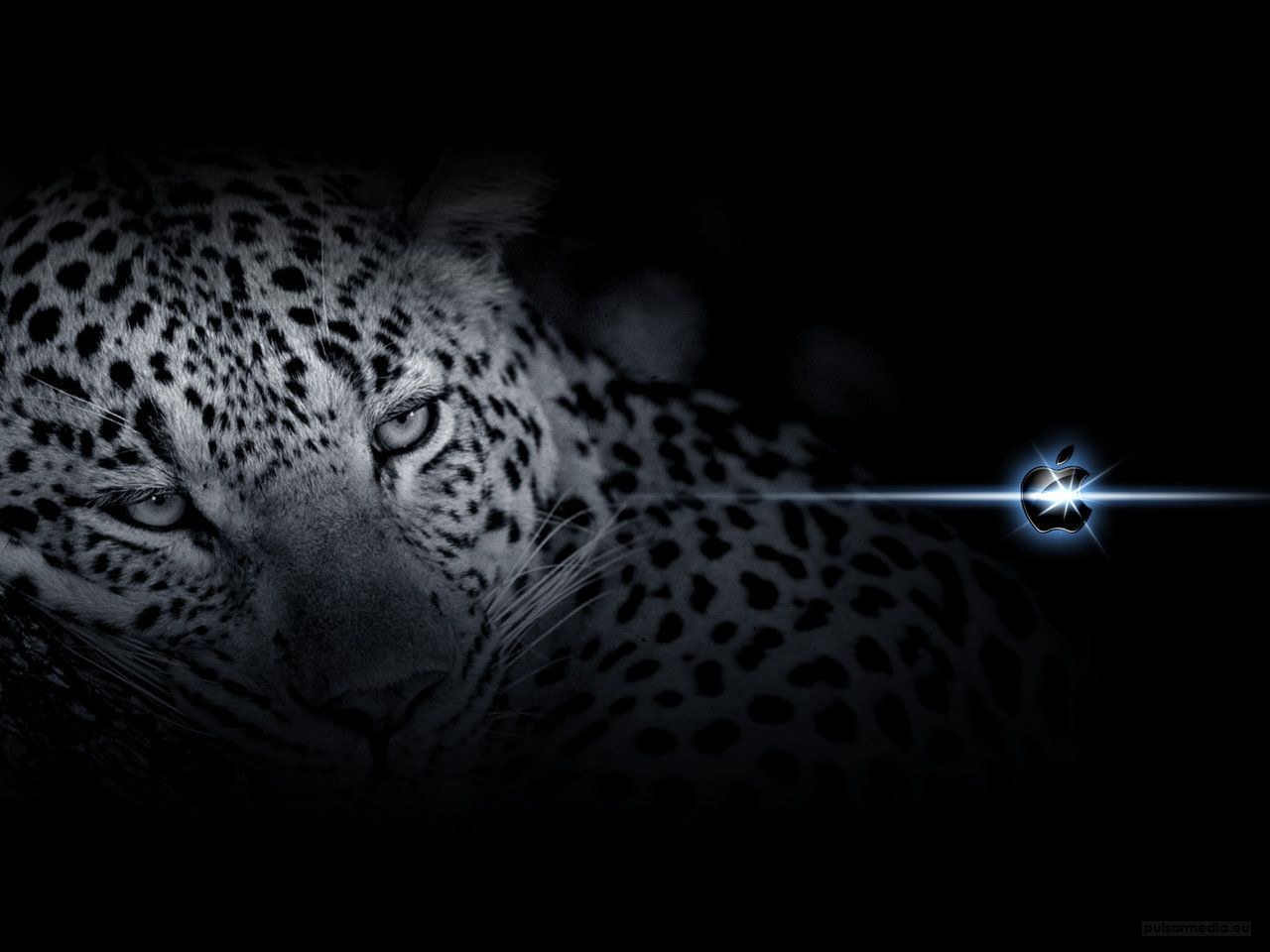 Good Wallpaper Mac Leopard - 89611176402409872f2dd9488e838986  Snapshot_18762.jpg